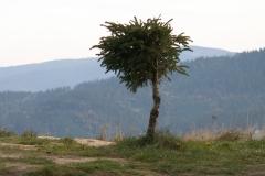 Koczy Zamek - Sance 2005