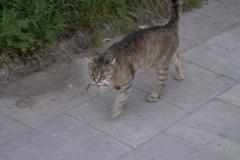 Mazury 2006